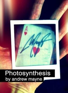 Photosynthesis by Andrew Mayne