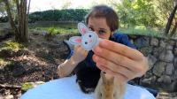 Hipp Hopp Rabbit by Rocco & Shaun Jay