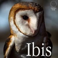 Ibis by Carlos Emesqua