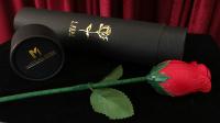 Y-Rose by Mr. Y & Bond Lee