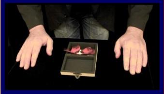 Artmik Teaser Origami fly